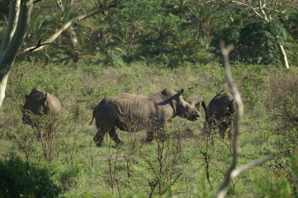 KZN is also of course Rhino Country..jpg