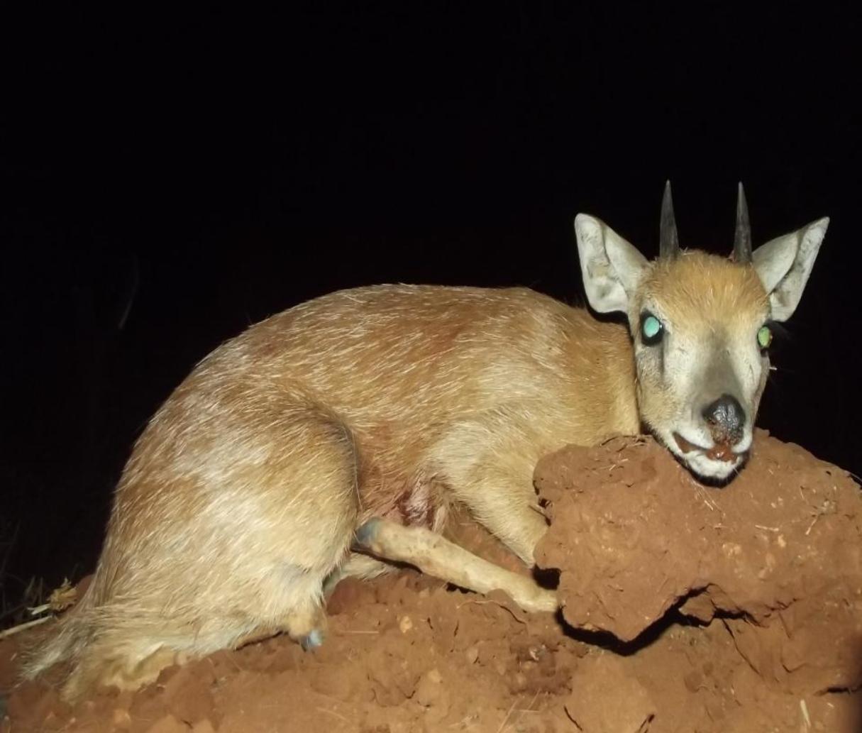 LBG Safaris Greysbuck (1).jpg