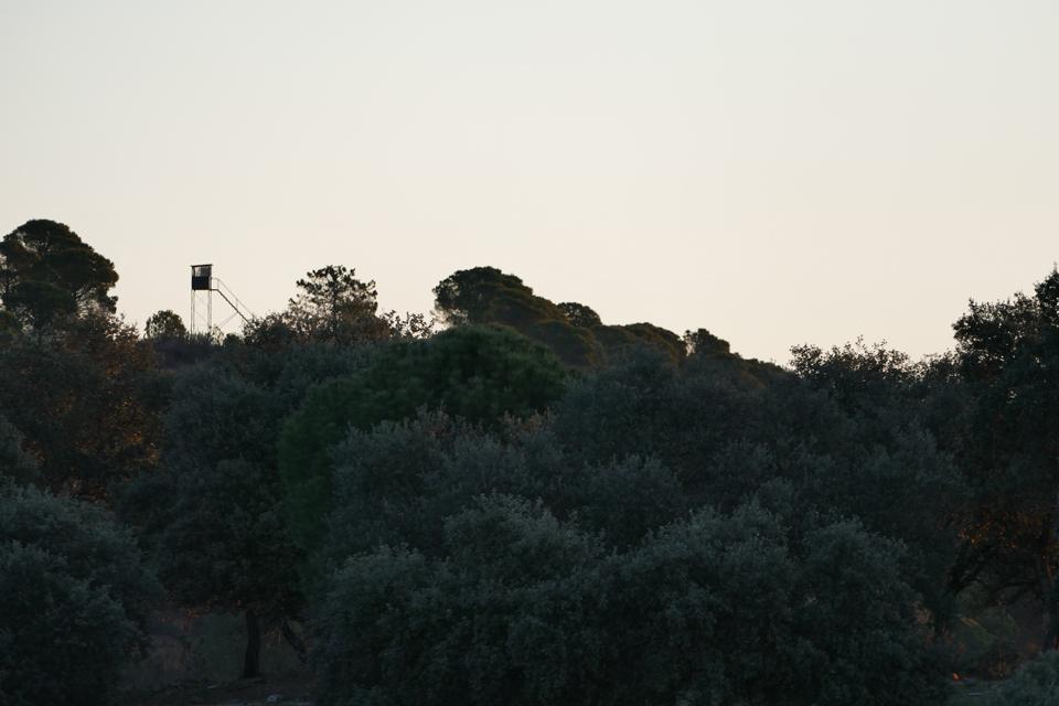 Le-soir-cest-laffût-qui-est-privilégié_960x640..jpg