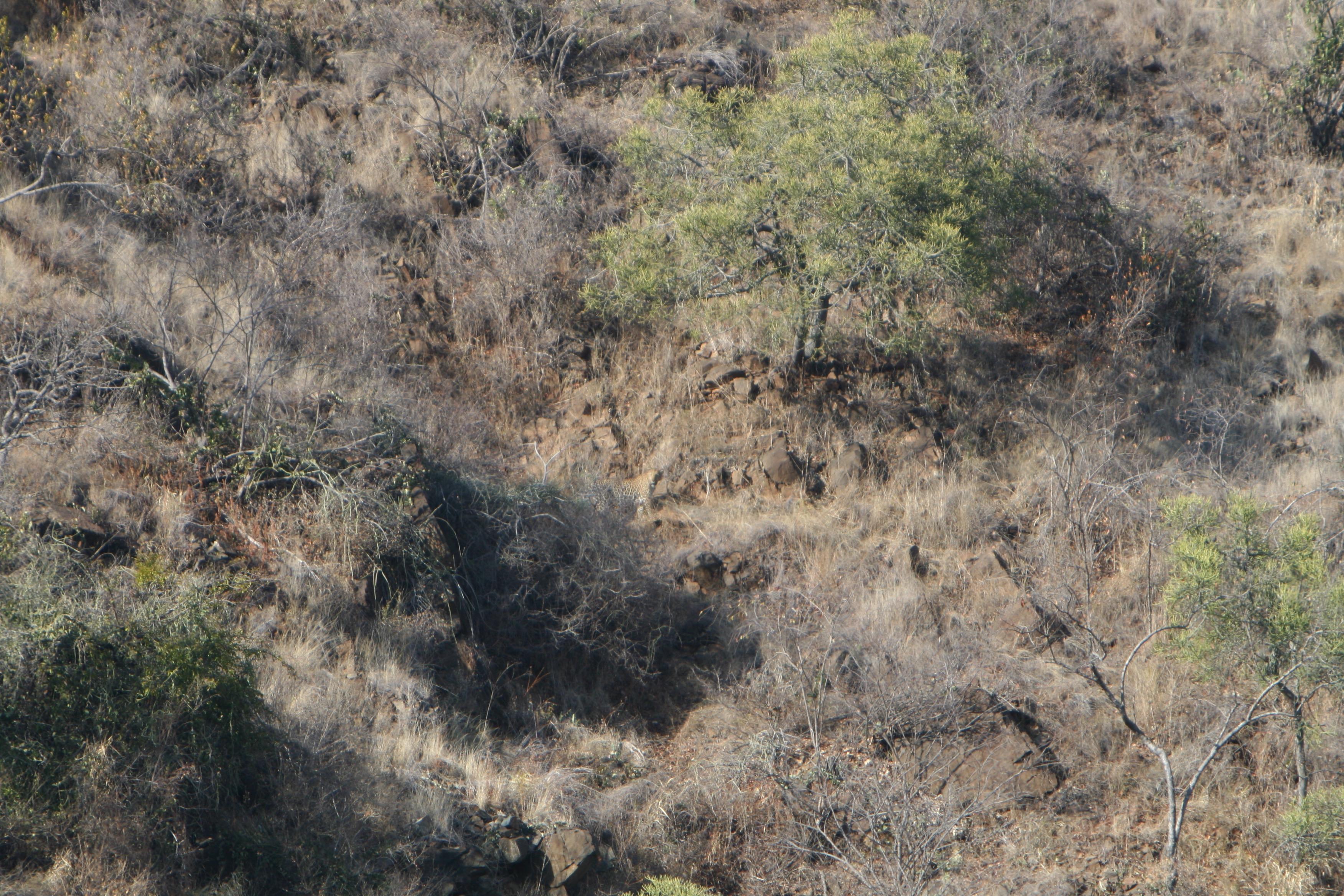 leopard 2.jpg