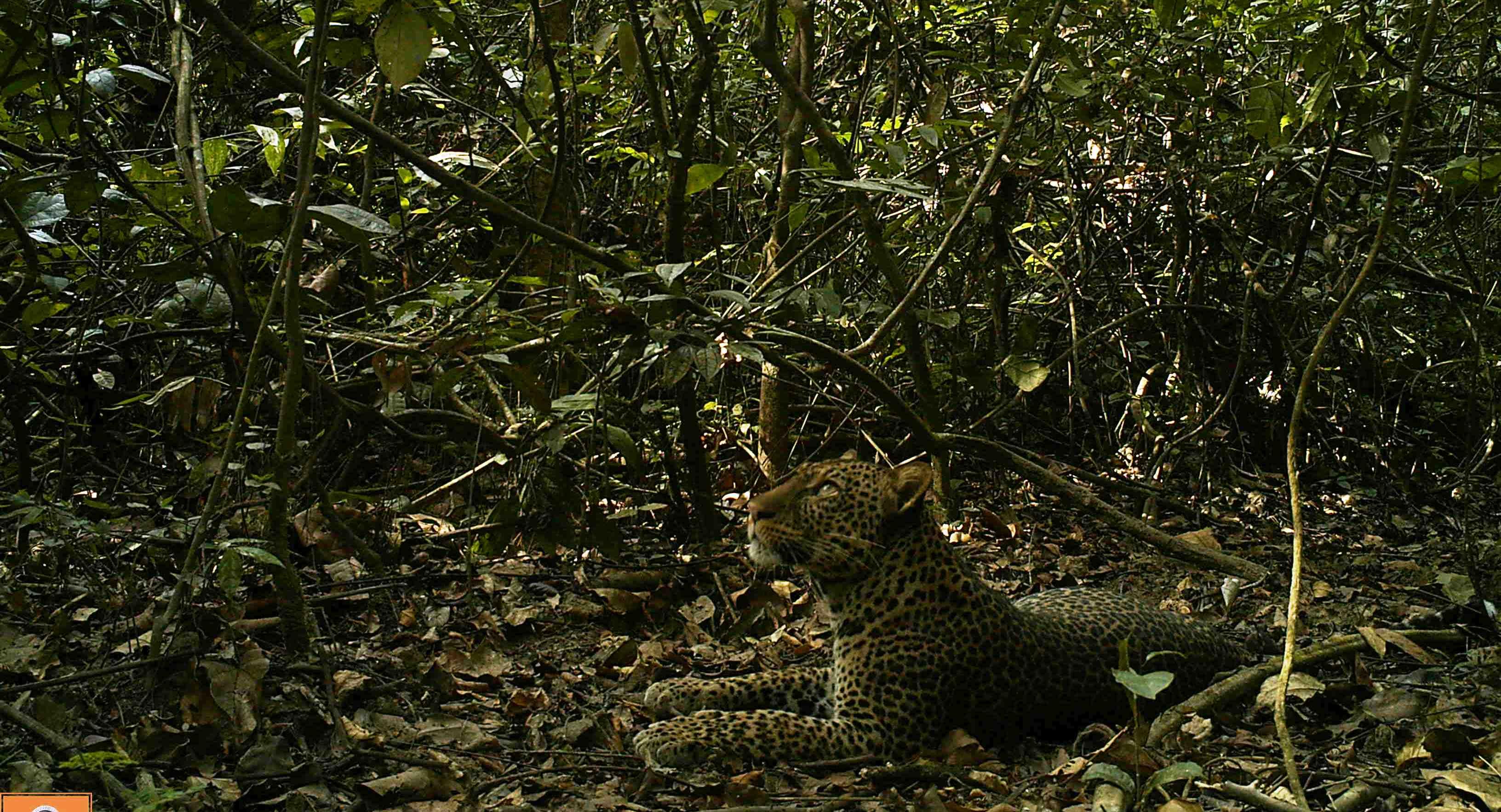 leopard (7).JPG