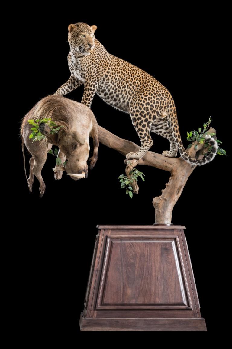 Leopard and Warthog Fullmounts- Custom Pedistal - GG120 (Medium).jpg