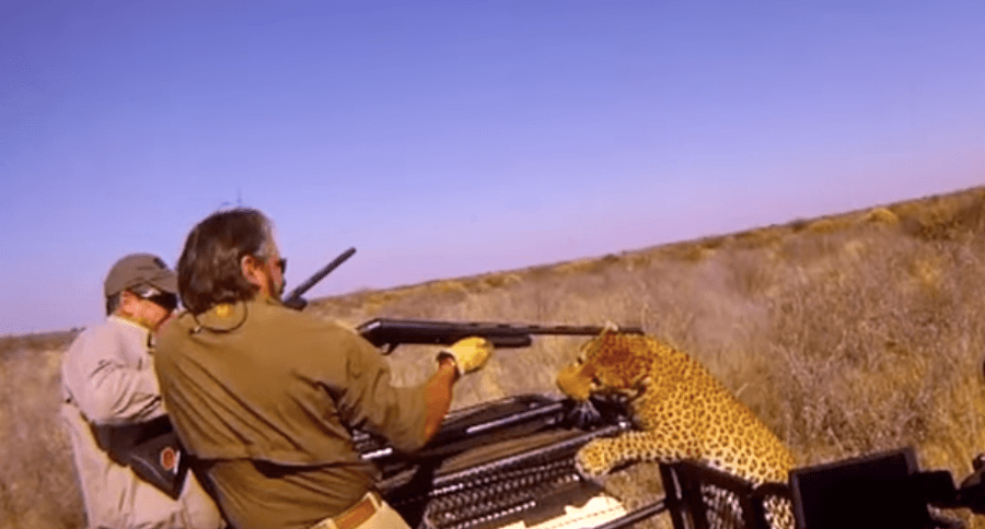 leopard-attacks-hunters-1.png