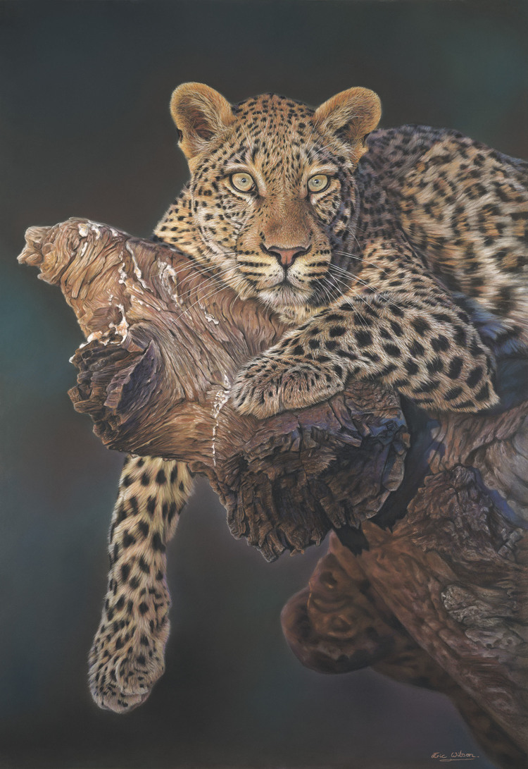 Leopard+in+Tree.jpg