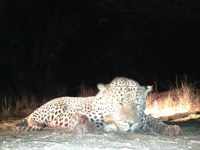 Leopard.jpg