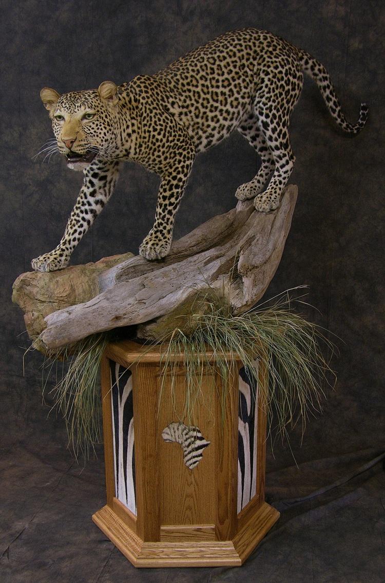 Leopard_david_1.jpeg