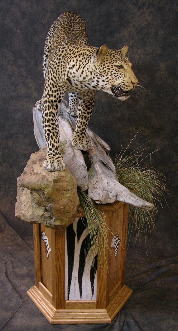 Leopard_david_3.jpeg