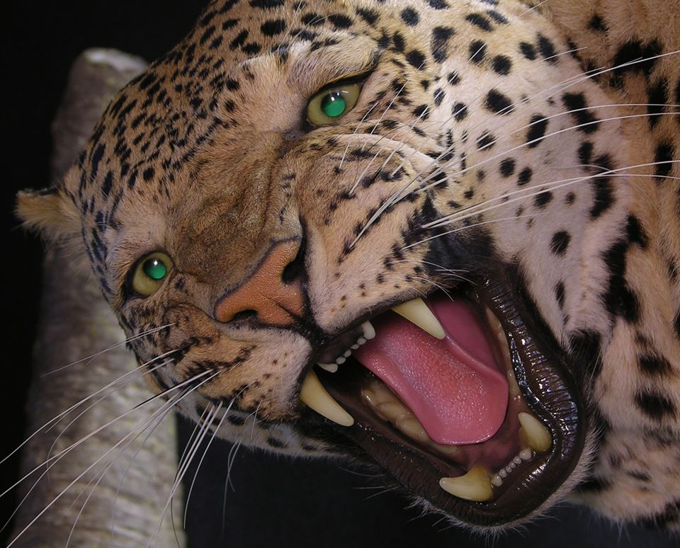 Leopard_the_artistry_of_wildlife_zpsc1a2fe86.jpg