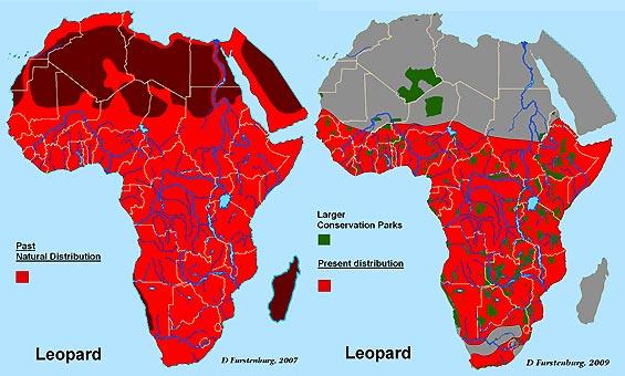LeopardMaps.jpg