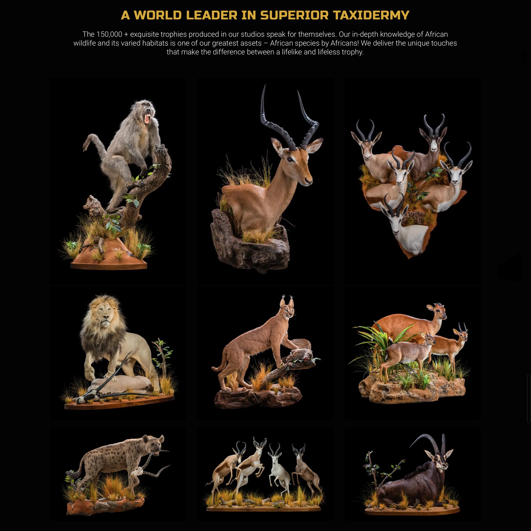 life-form-taxidermy-03.jpg
