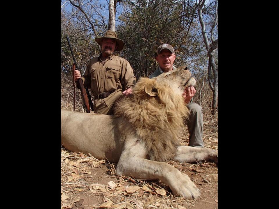 lion-01-3795811d82.jpg