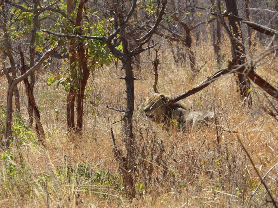 lion-08-f6e06a70f1.jpg
