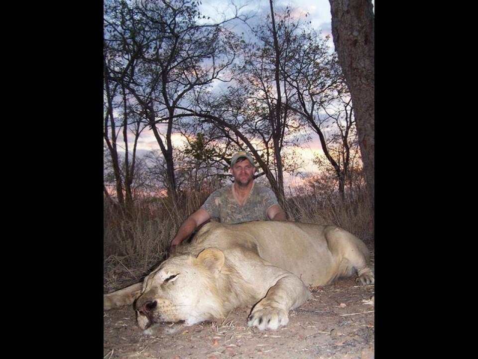 lion-11-78d3a89f72.jpg