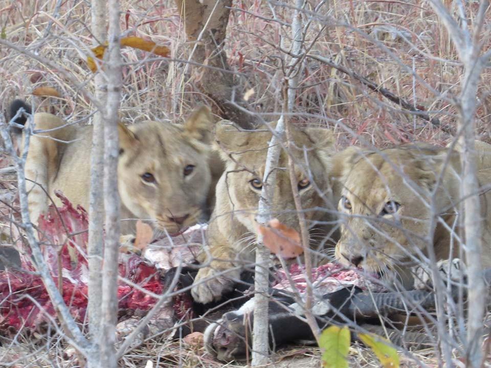 lion-2015-02-579fe98bc8.jpg