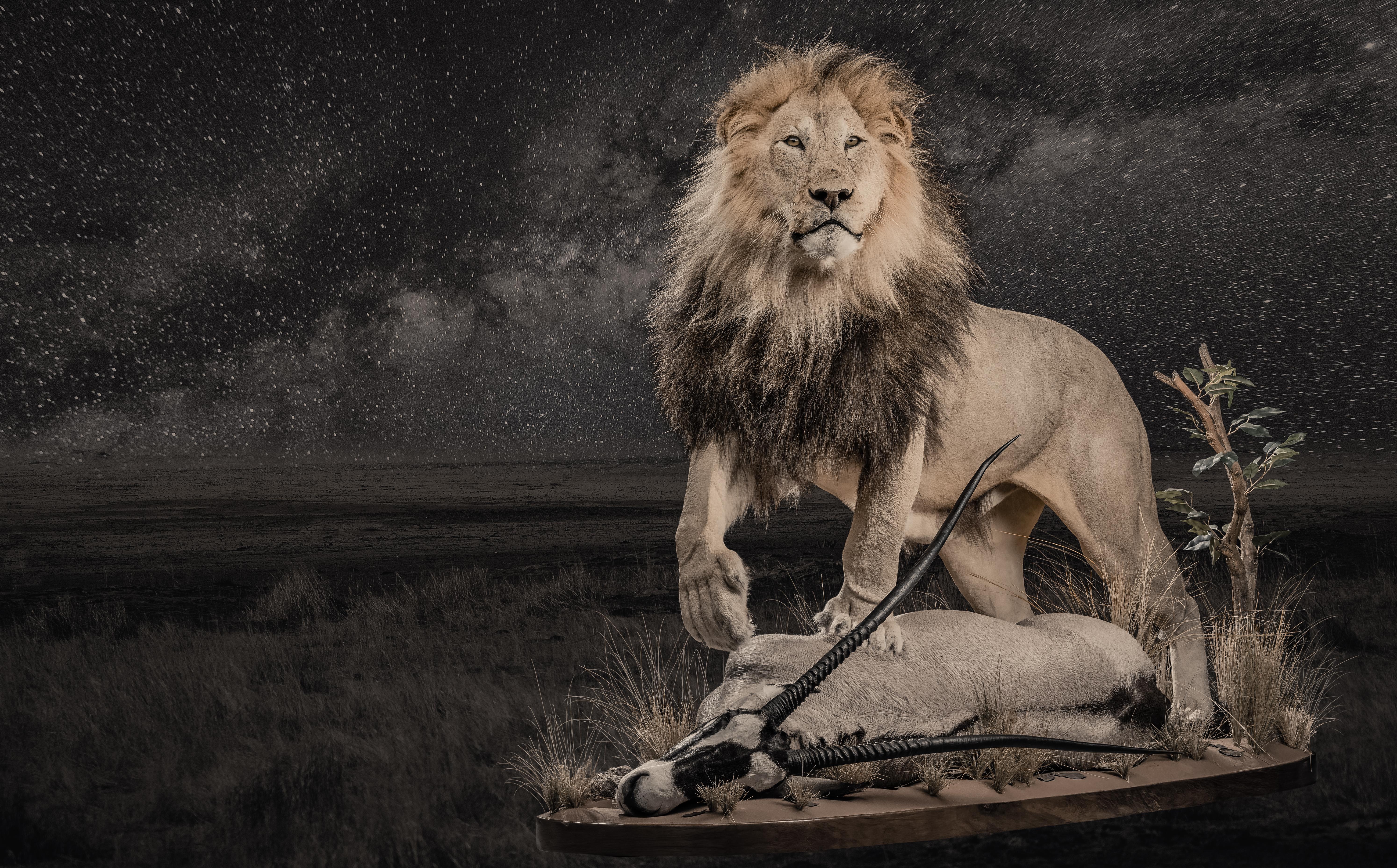 lion-and-gemsbuck-combination-mount-hh133-1_2-jpg.418023