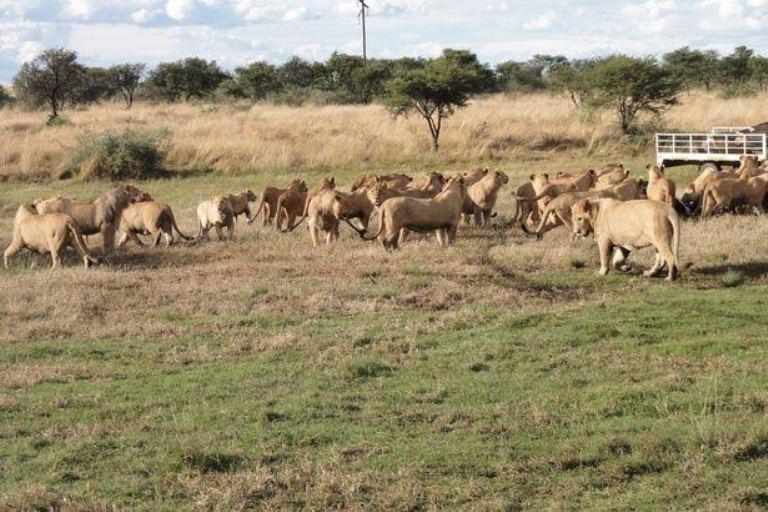 lion-bone-trade.jpg