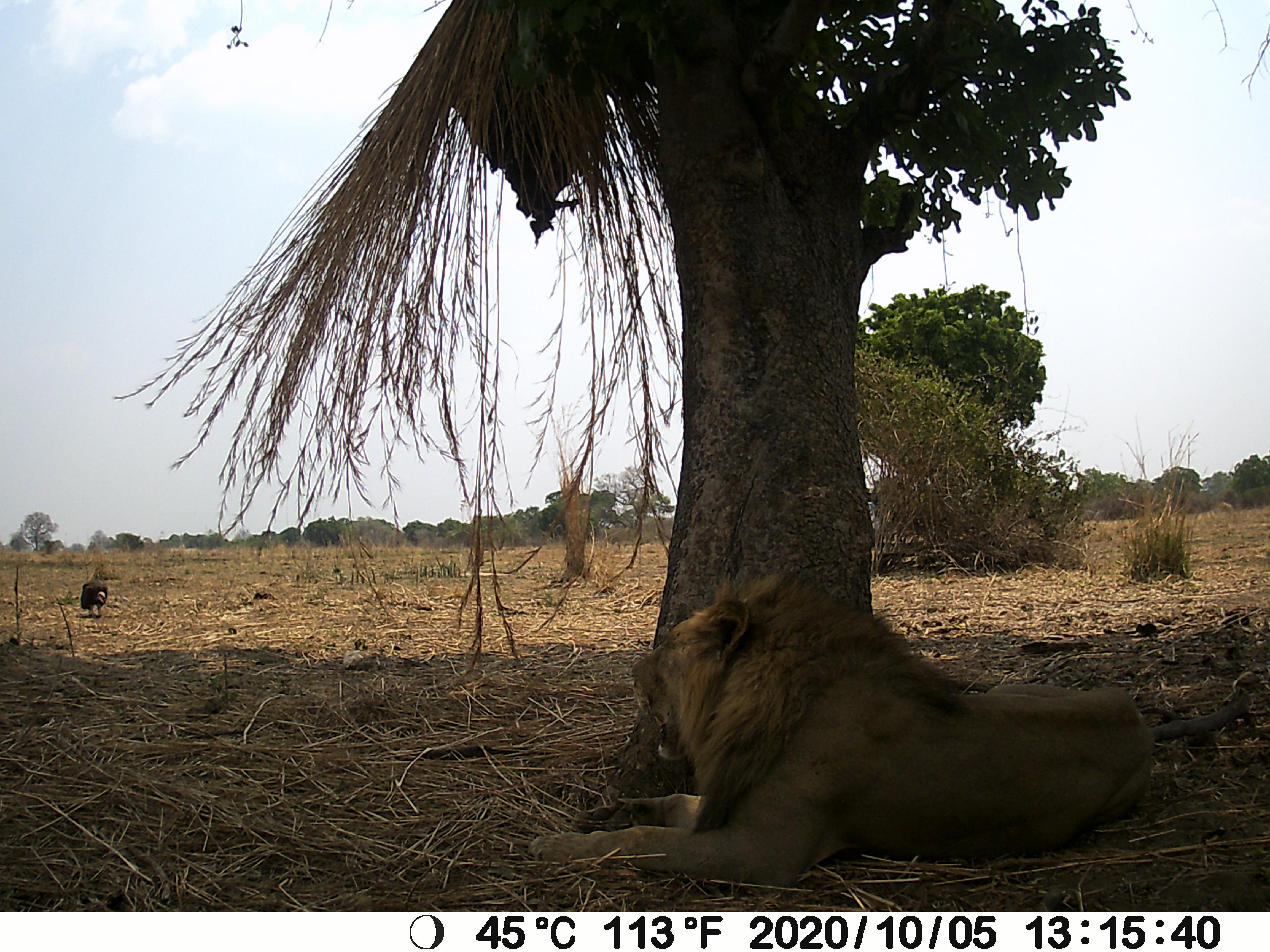 Lion Vulture.JPG