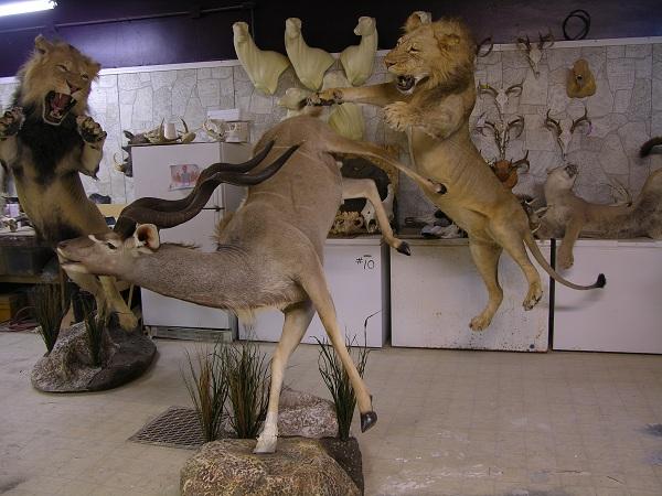 lion_kudu.jpeg