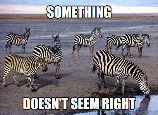 lion_zebra.jpg