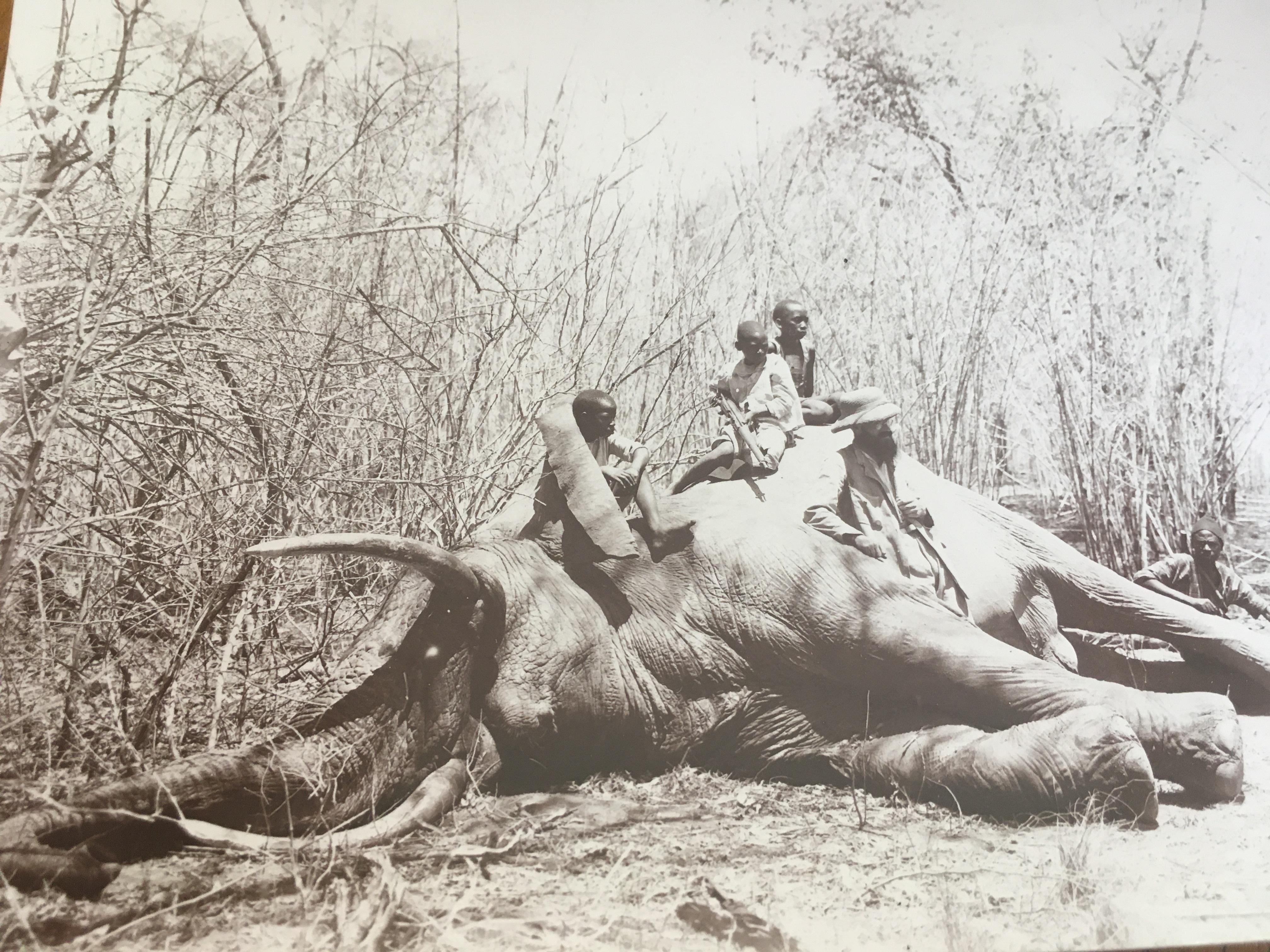 Mönch Elefantenjagd.JPG