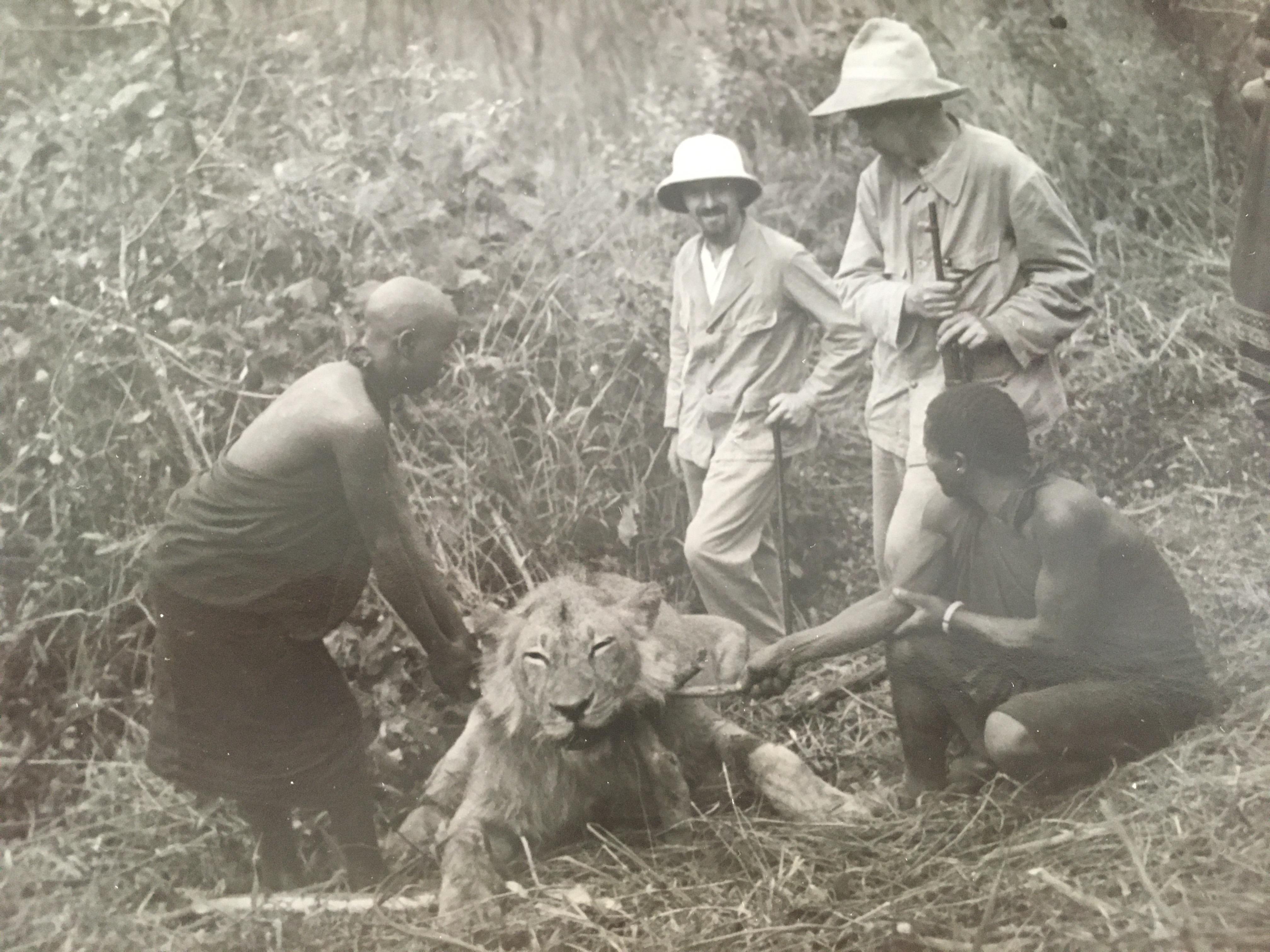 Mönche- Löwen waren oft ein Problem.JPG