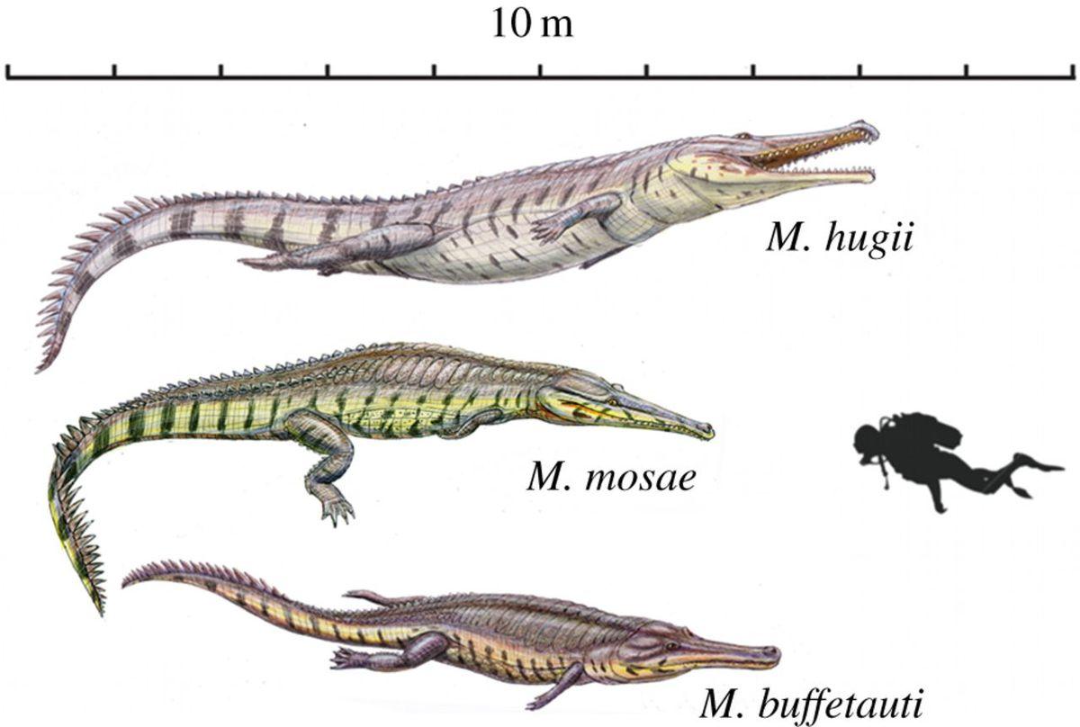Machimosaurus_illustration.jpg