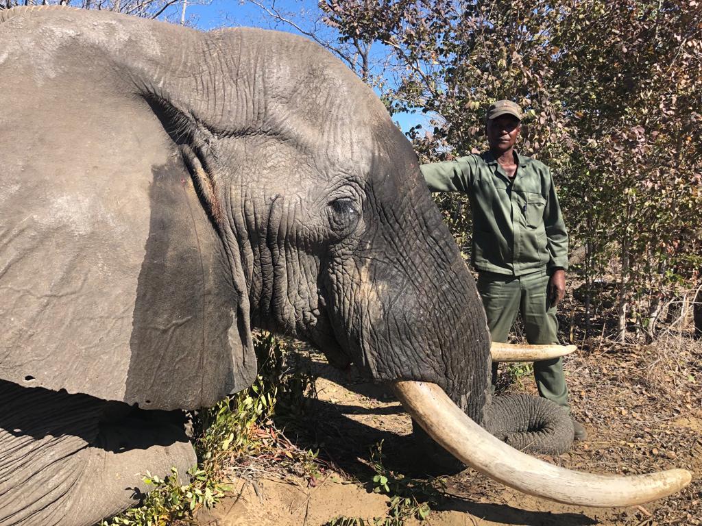 Mahango Elephant 1.JPG