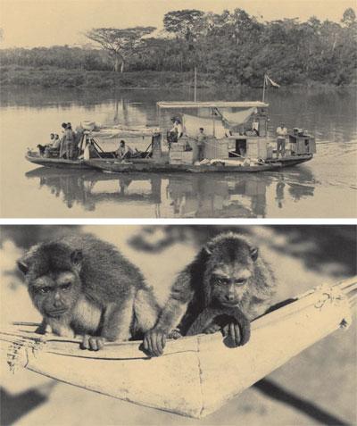 matto_grasso_river_monkeys.jpg