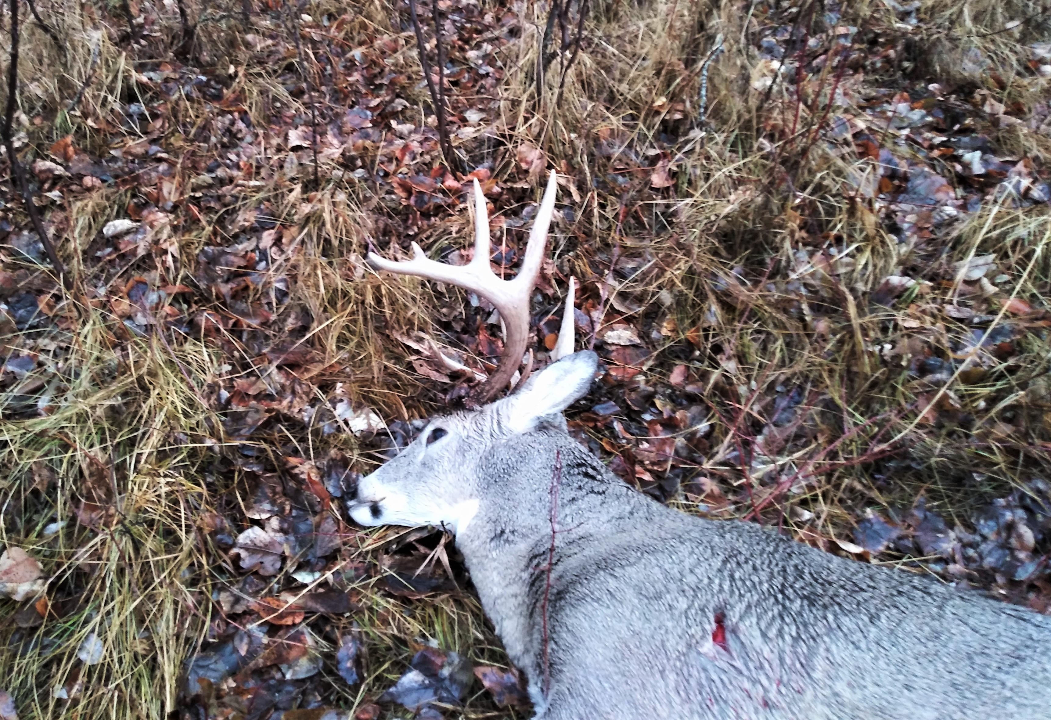 Montana deer 1.jpg