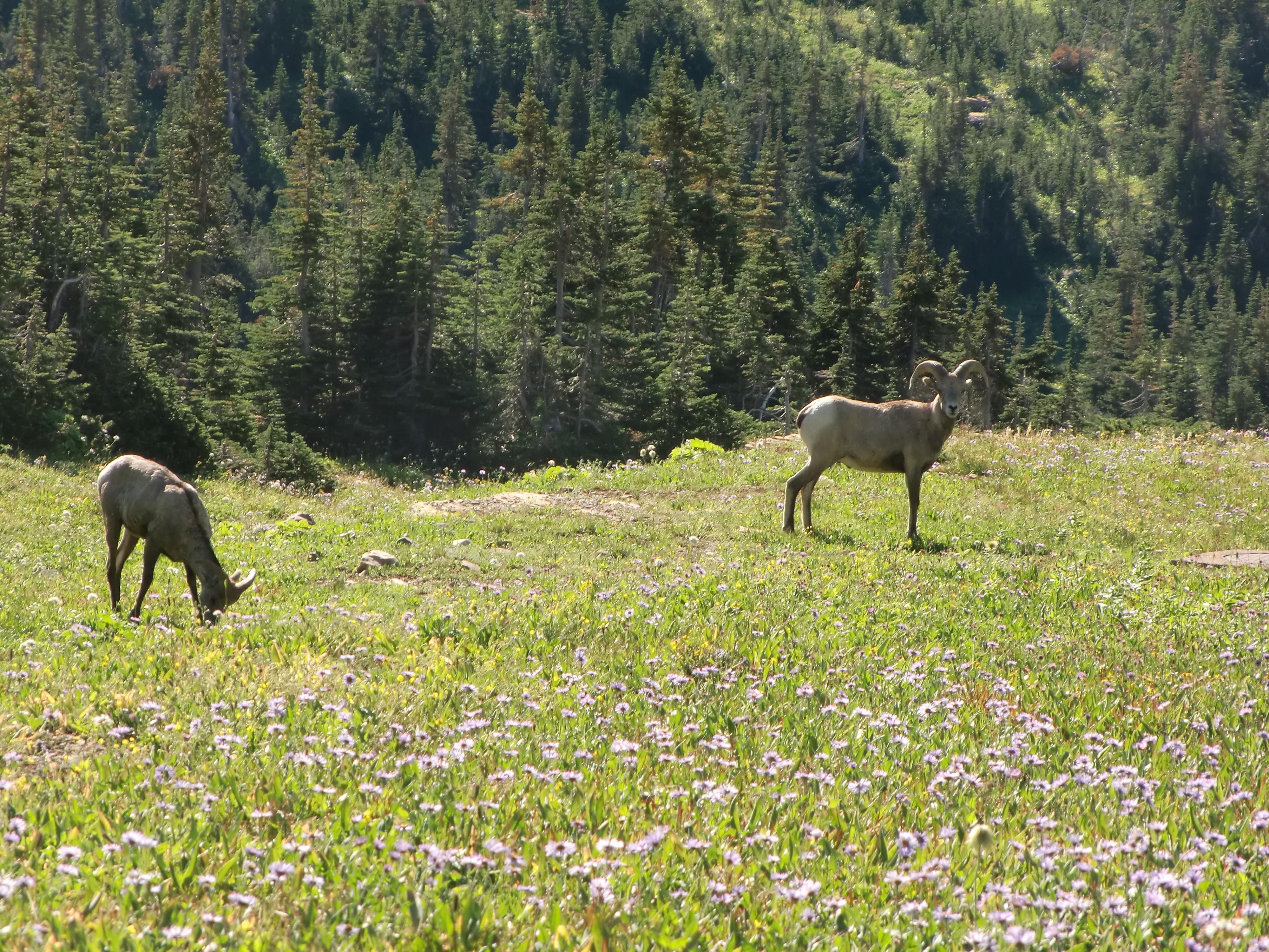 montana2011 063.jpg
