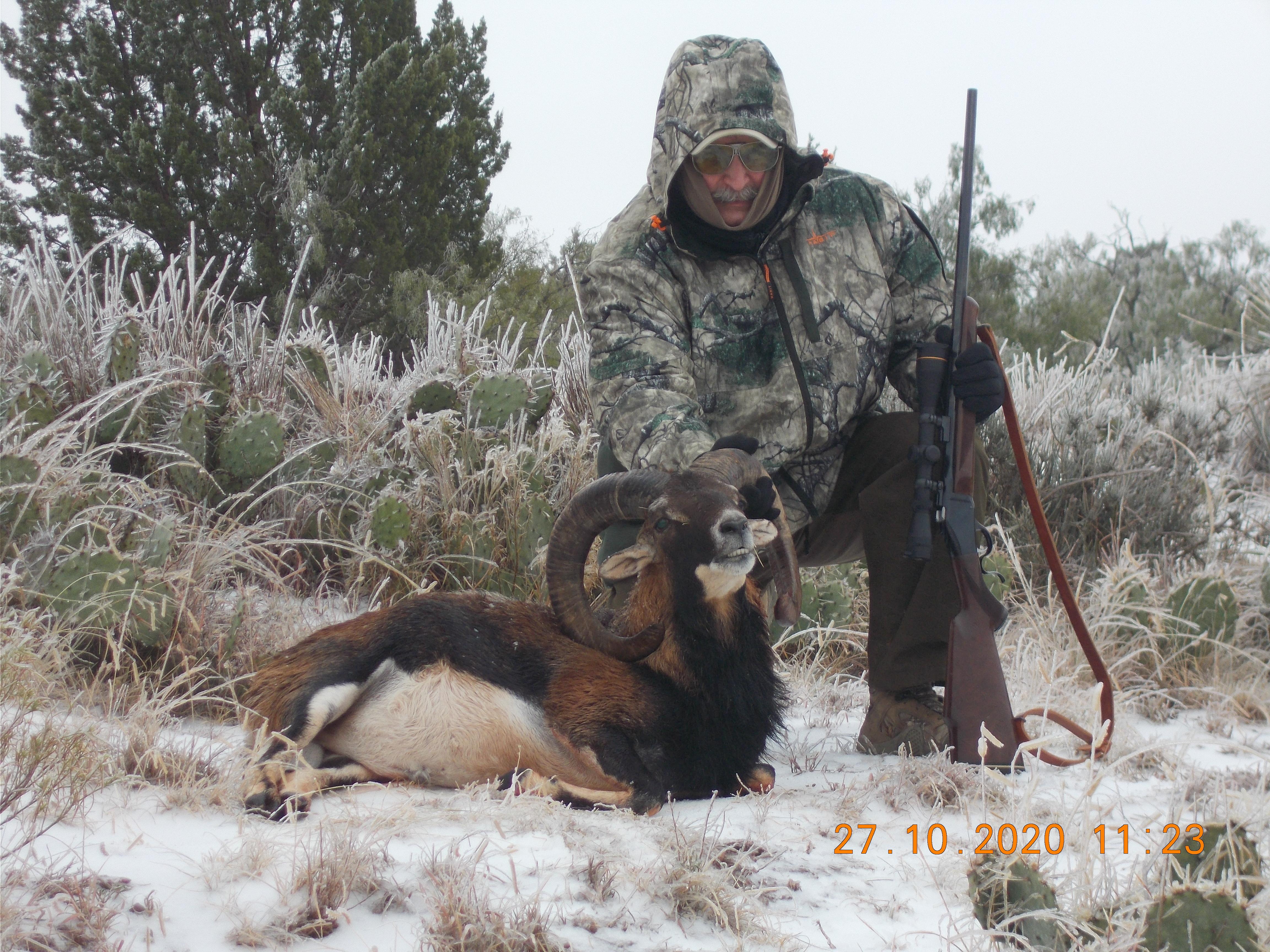 Mouflon 1.JPG