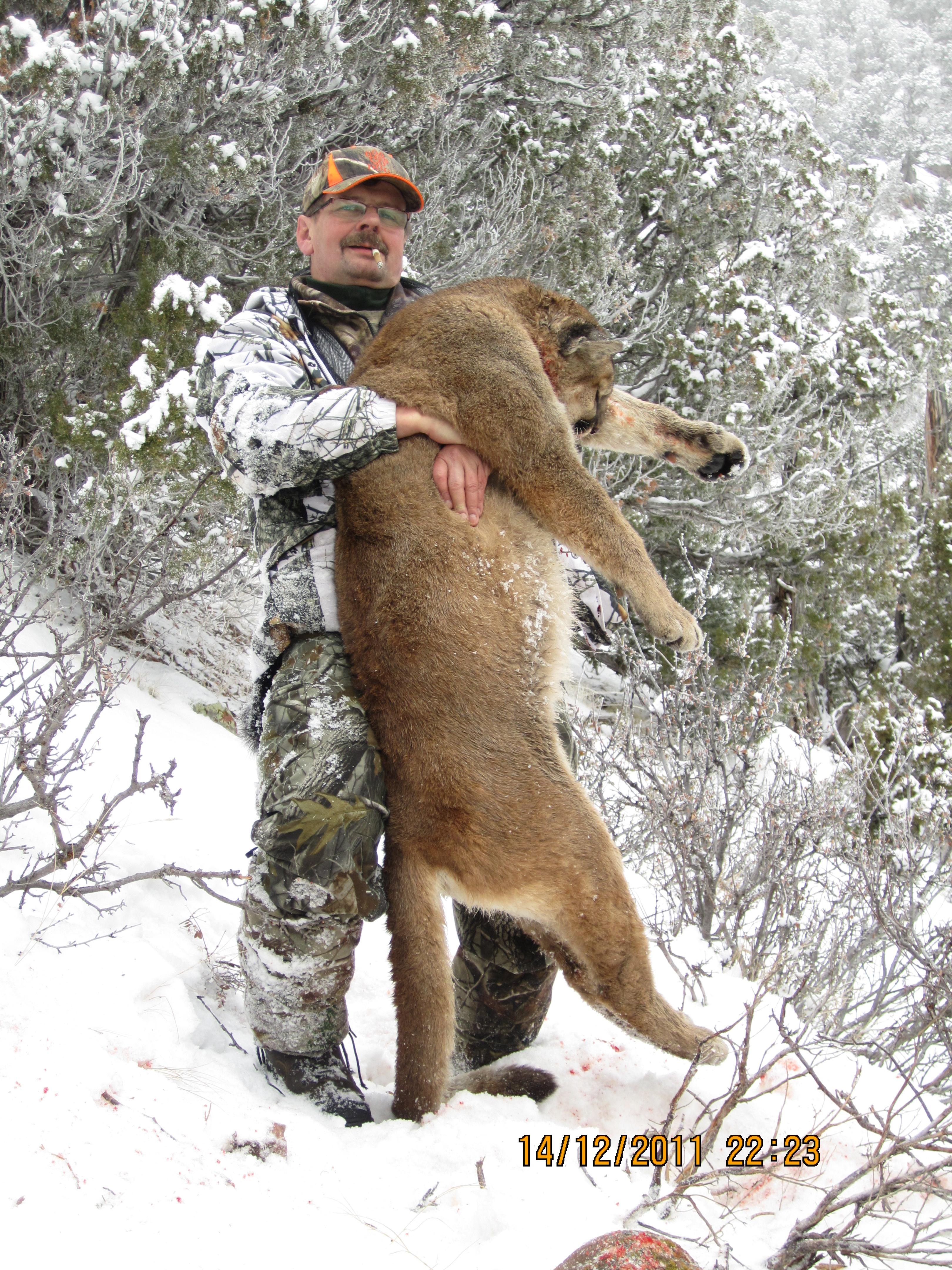 mountain lion Utah.JPG
