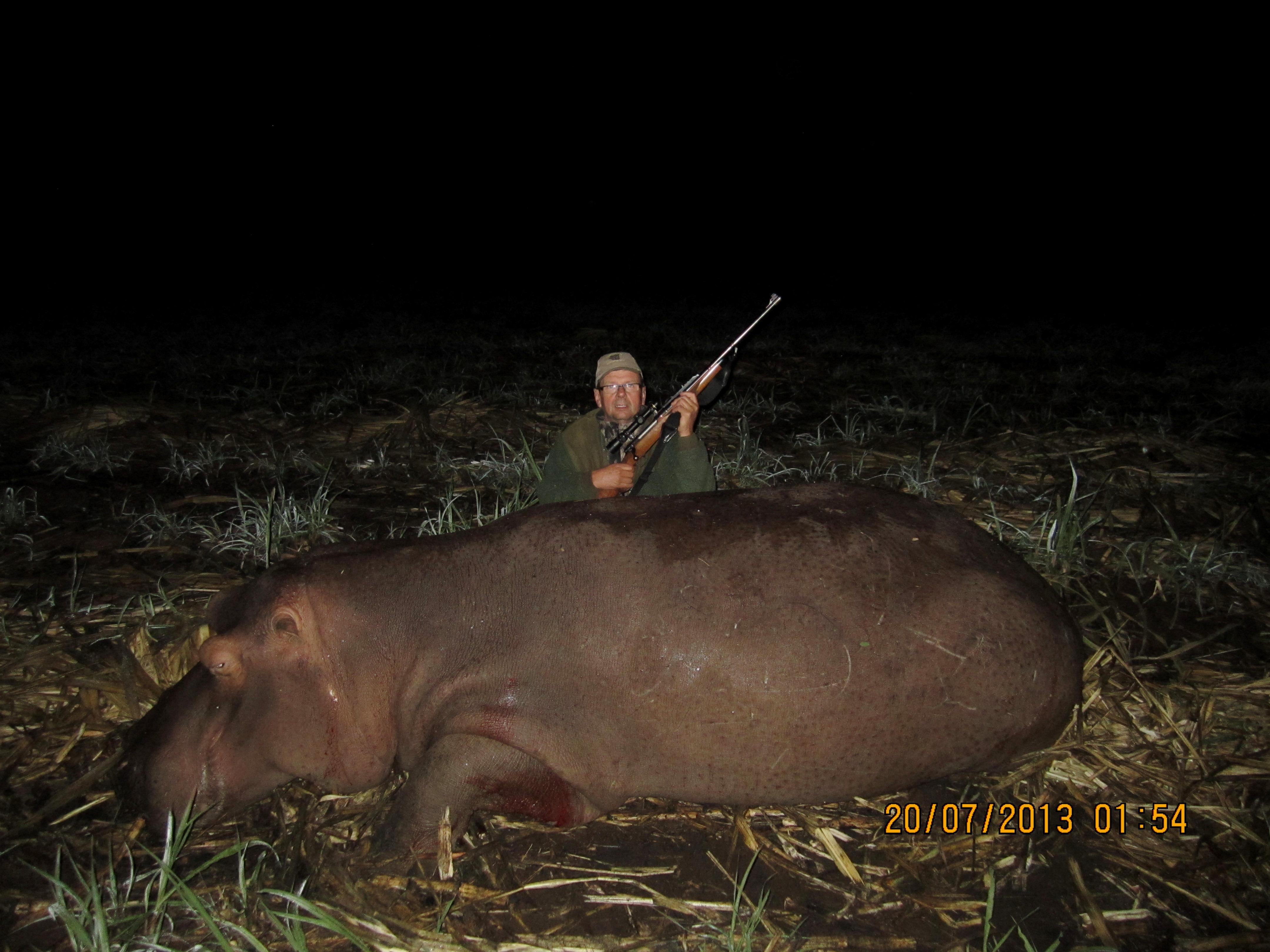 Mpumalanga hippo (1).JPG
