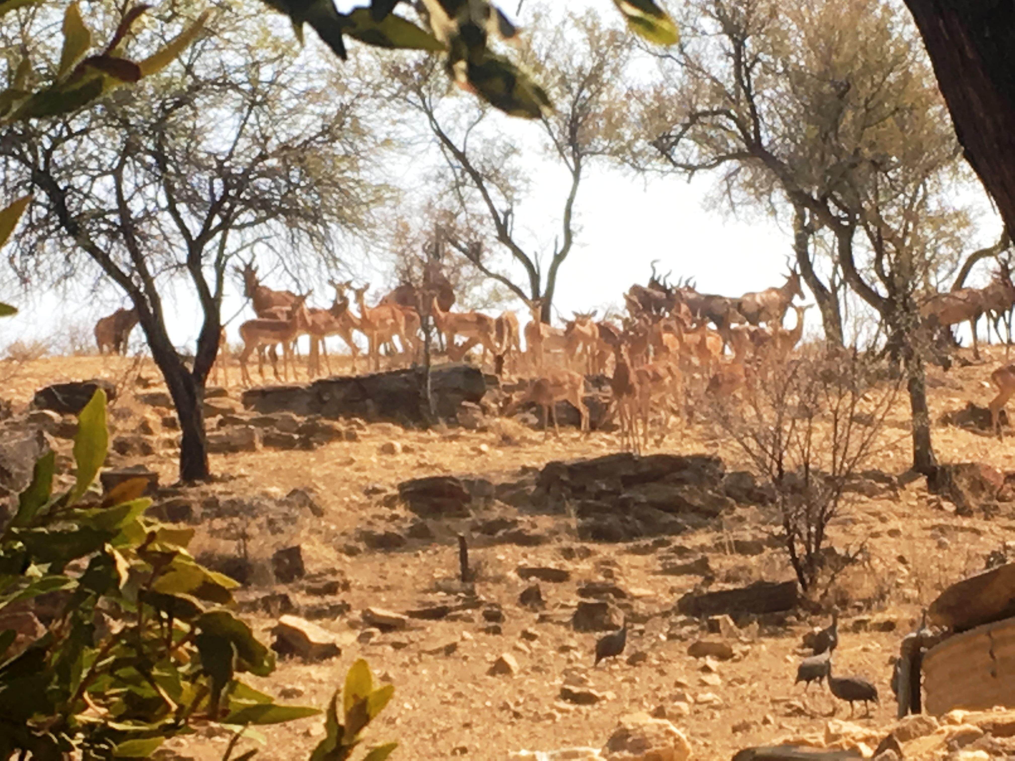 Namibia 11 010.JPG