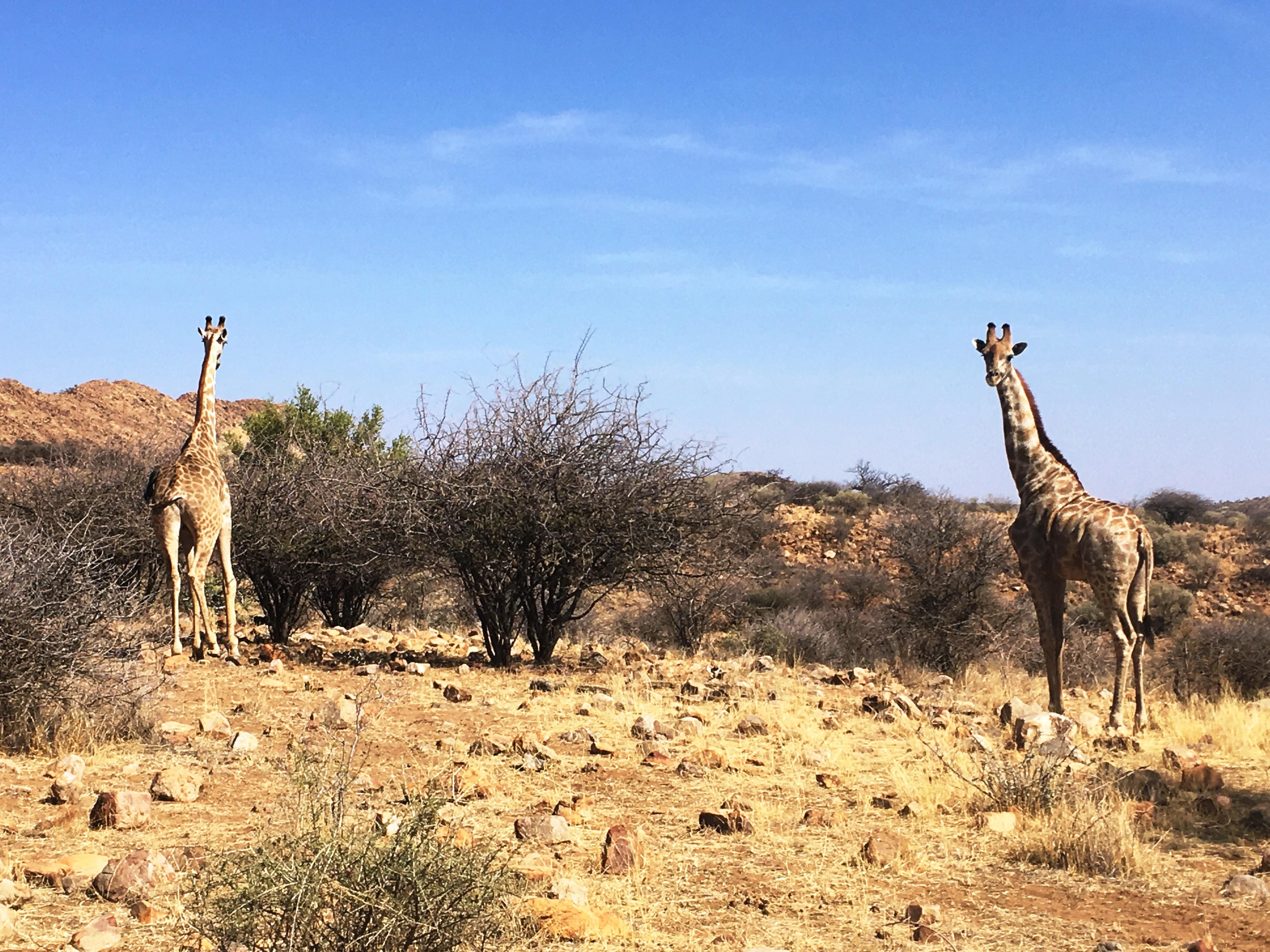 Namibia 19 025.JPG
