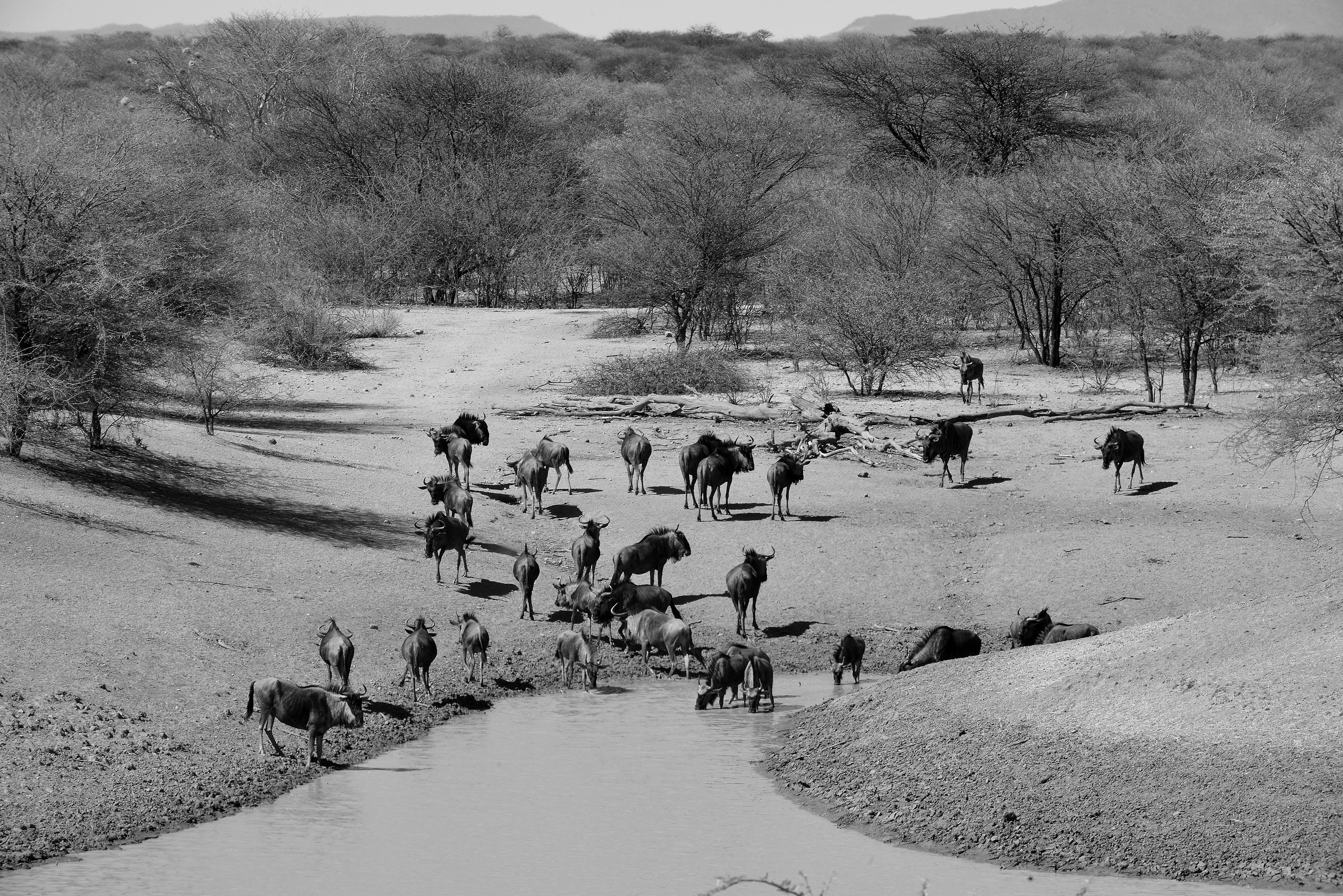 Namibia 2015  (1230).JPG