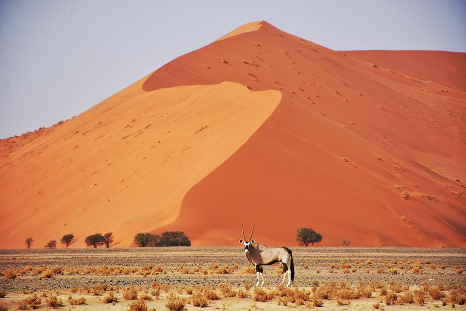 namibia gemsbok.jpg