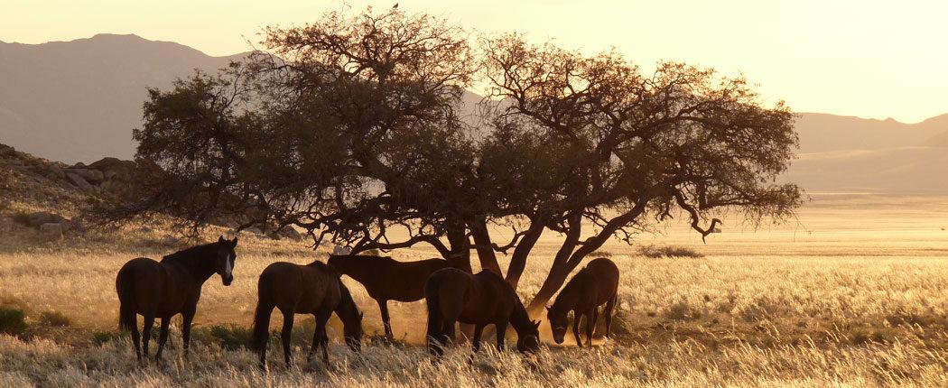 Namibia7-1050x430.jpg