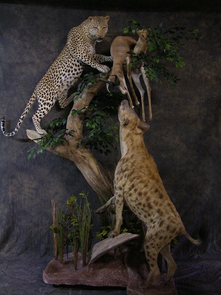 Newleopard.jpg