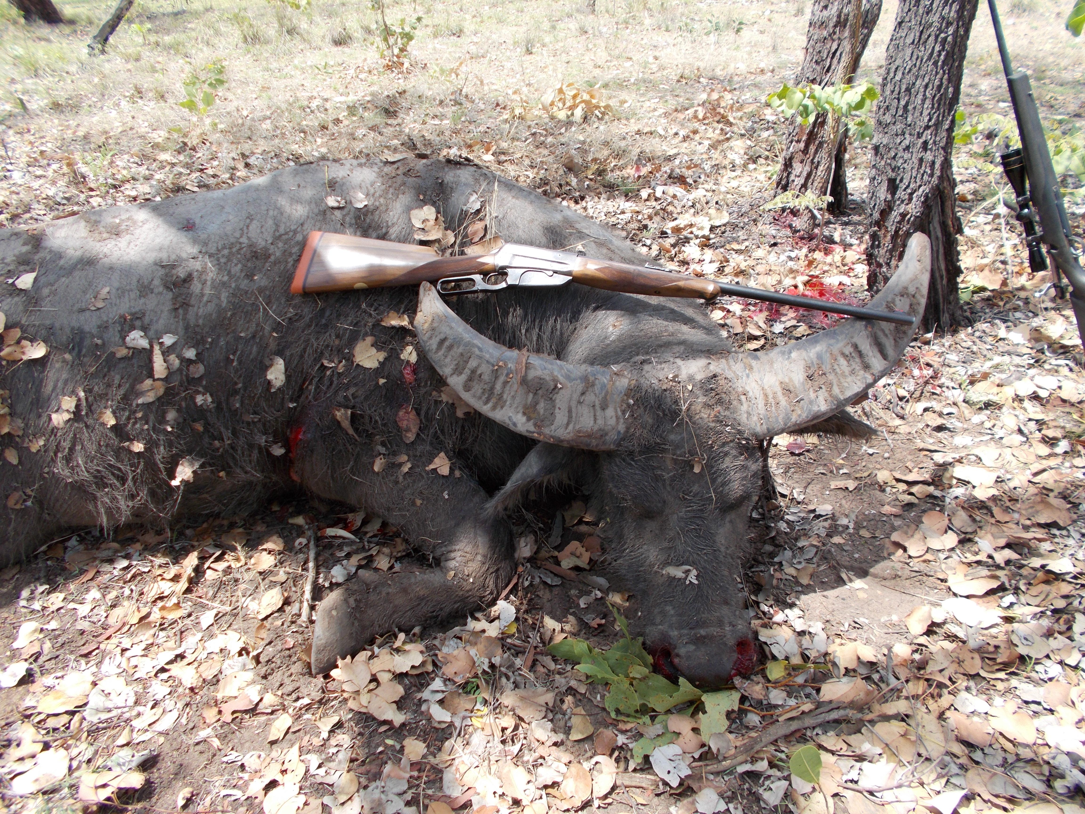 NT Buffalo Hunt 005.JPG