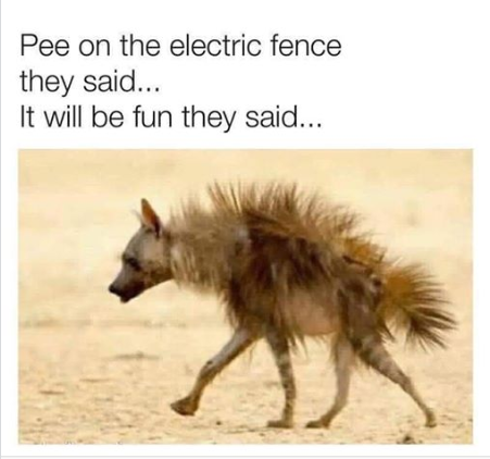 pee on fence.png