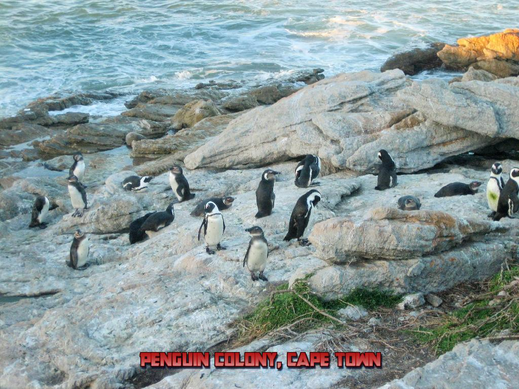 penguines.jpg