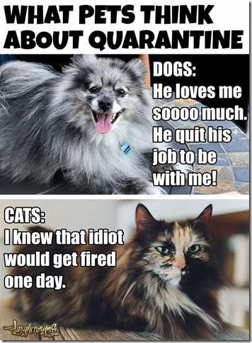 Pets_quarantine.jpg