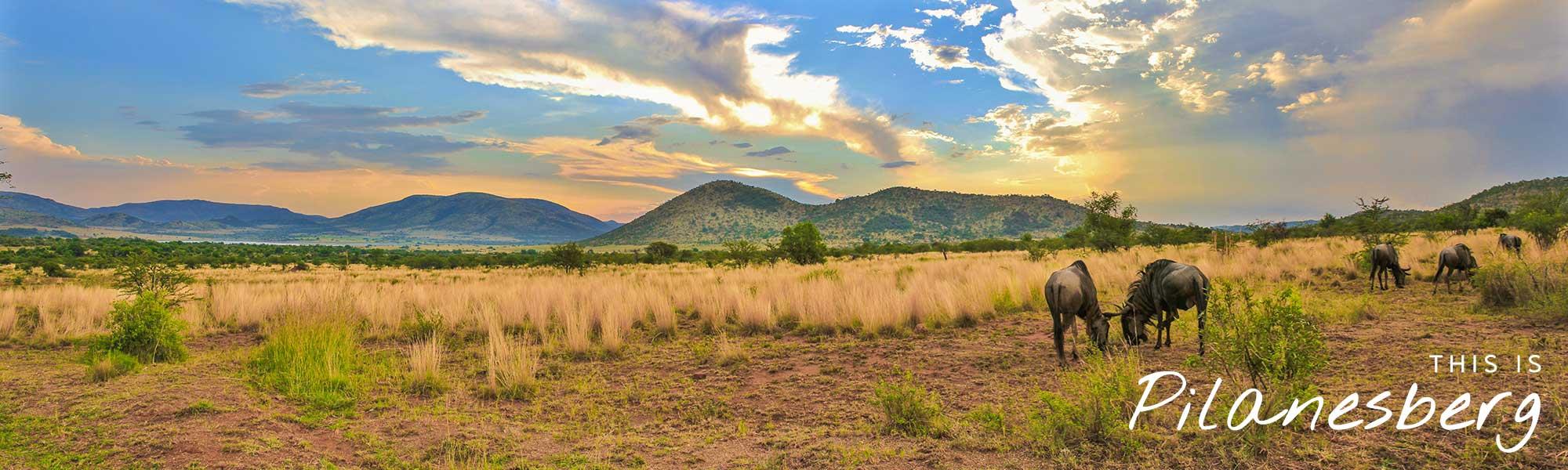 pilanesberg3.jpg