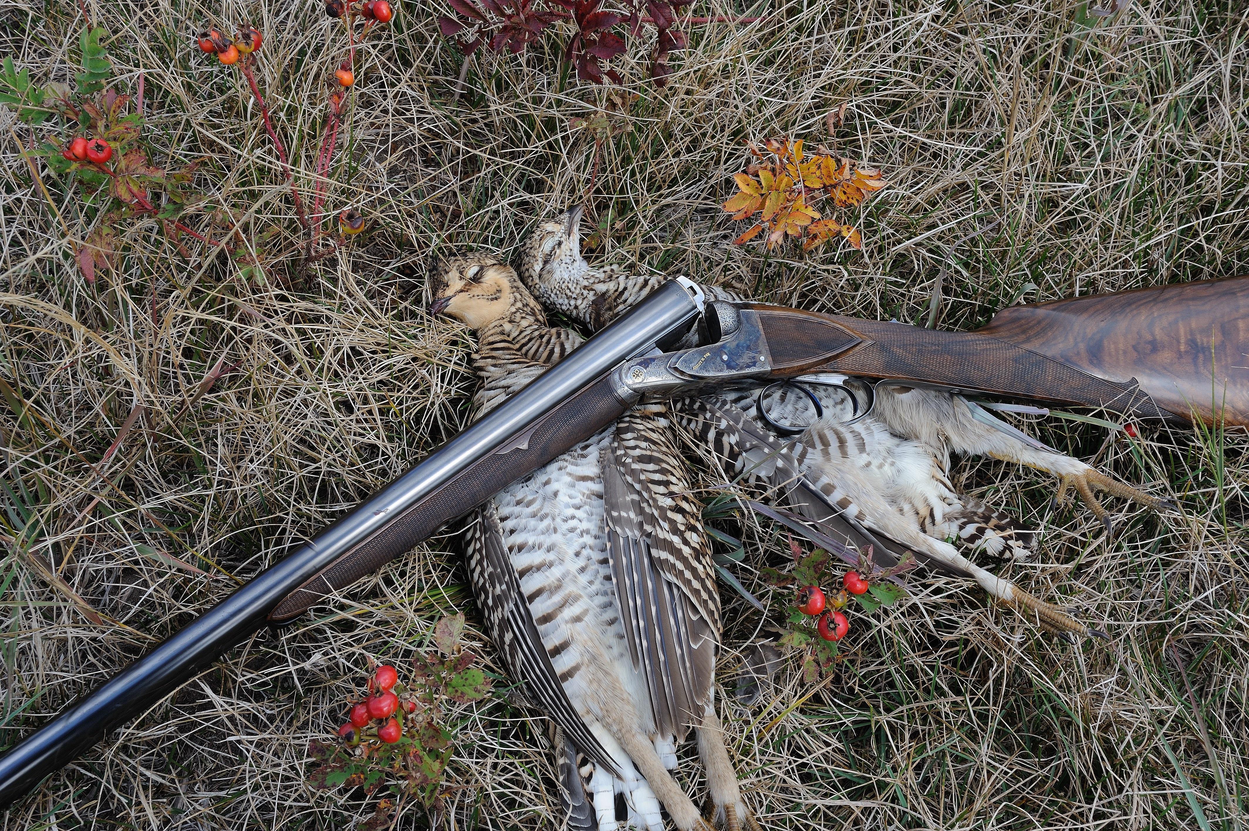Prairie chickens and Fox copy.jpg