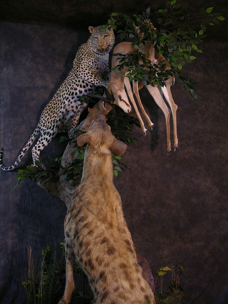 Prieto_leopard_hyena_1-1.jpg