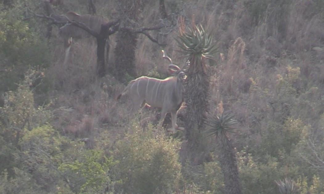 Ray Kudu (2).jpg