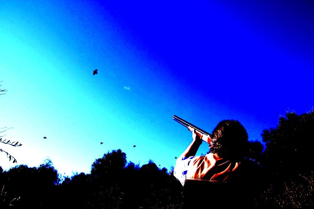 red partridges vs blue skies.JPG