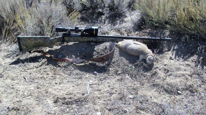 resize .223 prairie dog.JPG