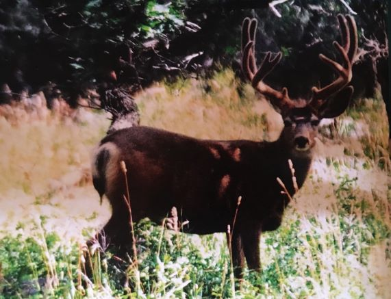 resize deer3.JPG